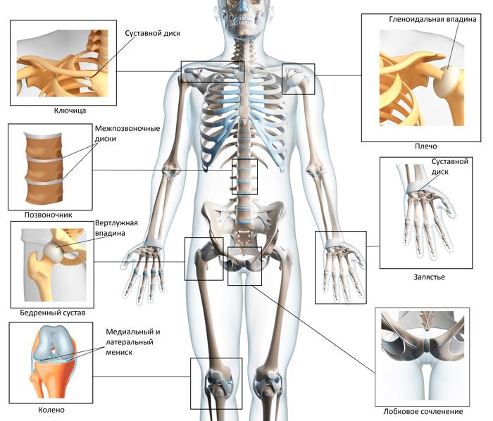 Ге находятся суставы таблетки от болей в суставах коленей